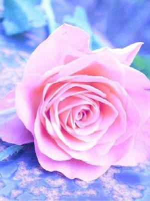 diamont-art-ροζ τριαντάφυλλο