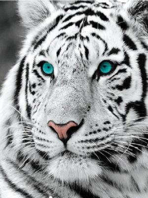 diamont-art-Λευκός Τίγρης