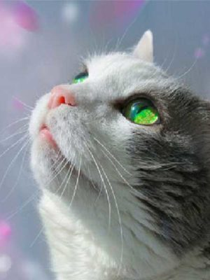 diamond-art-beatiful-cat